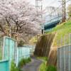 地元の桜 2021「ご近所 残り桜編」中編