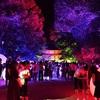 下鴨神社のライトアップ、糺の森の光の祭。