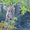 秋の東山動物園(5)管理人、迷子になる