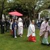 昨日と今日の両日は儀式殿で神前結婚式が斎行されました