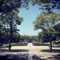 【写真】最近撮ったのは花や公園、そしてきれいな空