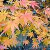 エレカシ富山公演の追加チケットと紅白のハナシ