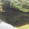 ニッポンバラタナゴの保護池へ