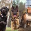 自然豊かな暮らしに最適な【10の犬種】