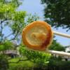 ご当地餃子の祭典「全国餃子祭り in うつのみや」レポート(最終回):宇都宮餃子「鵜の木」のまんまる焼き餃子