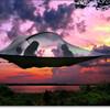 気分はツリーハウス!空中テント Tentsile