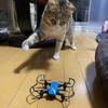 ドローンで猫撮影は難しい。