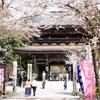日本 自宅周辺の桜は満開