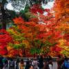 京都・永観堂へ紅葉を見に行ってきた
