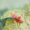 ジュッテンイロウミウシ