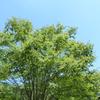 街路樹の農薬散布が歓迎される街