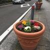元町の川沿いの通りの巨大な植木鉢