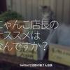 1271食目「にゃんこ店長のオススメはなんですか?」twitterで話題の猫さん店長