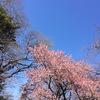 3月の東京の服装 北海道との季節の違い-東京3days