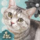 猫との生活 Kissa Life