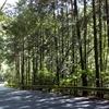 夏本番サイクリングコース開拓