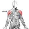 三角筋を鍛えてマラソンの腕振り強化