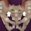 腰痛患者さんは三叉神経痛に罹患しやすい理由について考察する
