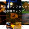 【神石高原ティアガルテン ソロキャン】野生動物とエンカウント!キャンプに猫ちゃん参戦!!