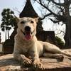 ミャンマー旅行記4日目「ミャンマー犬」