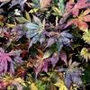 紅葉満開の戸隠神社で秋のパワーチャージ