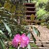 母を連れて奈良室生寺と長谷寺へ