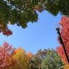 買いもの日和の 休日と、秋の公園
