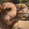 駱駝が針の穴を通るとは2 〜駱駝を見過ごすな