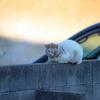 近所のボス猫?降臨。