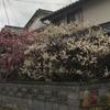 湊厄神宮(八坂神社)