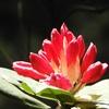 御岩神社の今日の花