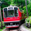 紫陽花と登山電車