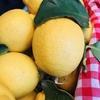 タルト・オ・シトロン フランスのレモンのタルト