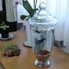 濾過音に悩まされずに飼える熱帯魚