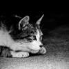 『もしも飼い猫があなたを殺そうとしていたら・・・?』が猫好きにお勧めの一冊!!