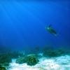 6月8日は「世界海洋デー(World Ocean Day)」~海を大切にしよう!