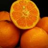 【柑橘類】ポンカン&はれひめ入荷しましたよ♪