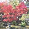 円山公園の紅葉②観光45...20191201京都