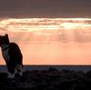 岩合光昭の世界ネコ歩き「沖縄 久高島」(2019)