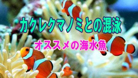 カクレクマノミとの混泳【オススメの海水魚】part1