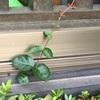 あ〜ら不思議❣️植物は成長しています。