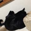 「ニャン太を探して」53