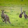 オーストラリア移住・驚愕の第1日目回想(その1)
