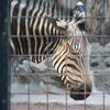 【撮ってみた】都民の日は上野動物園が無料で助かります(笑)【動物の秋】【写真の秋】【まだ暑い秋】