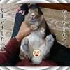 うさぎの写真 22