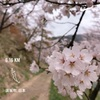 お花見ラン(プチトレイル)