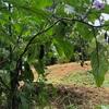 初心者の家庭菜園 2年目 雨が上がって