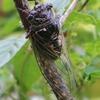 庭に来る昆虫