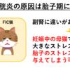 【猫の特発性膀胱炎(FIC)①】概要と病態生理