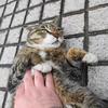 4月後半の #ねこ #cat #猫 その3